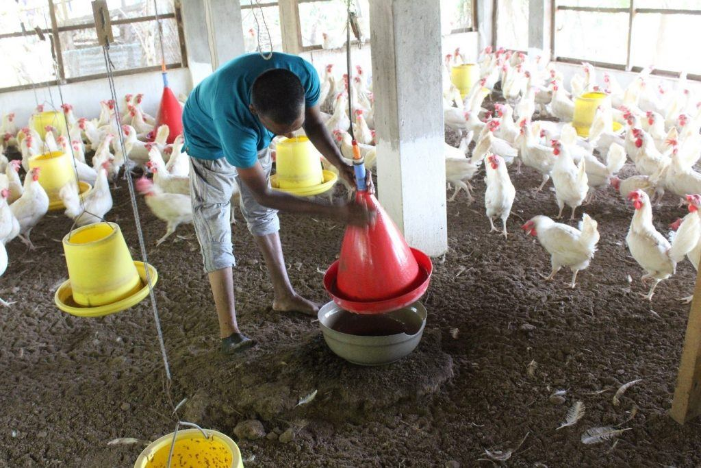 A Sri Lankan man tends to his chickens, a vital source of income for him and his family, thanks to livelihood support from AJWS grantee CPPHR. Photo by CPPHR